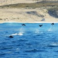 Лицензия CC0 Creative Commons, автор design516